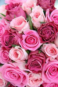 prettiest pink blooms