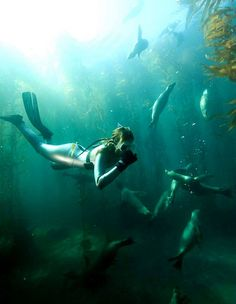 Diving...snorkeling is as brave as I got....but very beautiful over coral reefs in Pacific Ocean