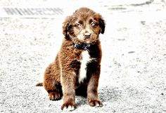 Baby dog - null