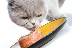 Kattovit Katzenfutter – hochwertige Marke, weiterlesen & online kaufen