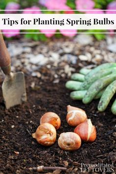 These Tips for Planting Spring Bulbs include when and where to plant your flower bulbs for optimal growth. Come spring, your garden will look spectacular! DIY flower garden idea and tips.