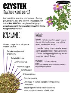 Co warto pić Healthy Habits, Healthy Tips, Avocado Health Benefits, Smoothie Drinks, Smoothies, Health Advice, Natural Medicine, Raw Food Recipes, Superfood