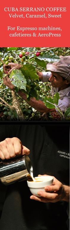 Where can I buy Cuban coffee beans? Adams + Russell offer Cuban coffee roasted in small batches for ultimate freshness Cuban Coffee, Coffee Supplies, Buy Tea, Coffee Roasting, Coffee Beans, Coffee Shop, Herbs, Fresh, Food