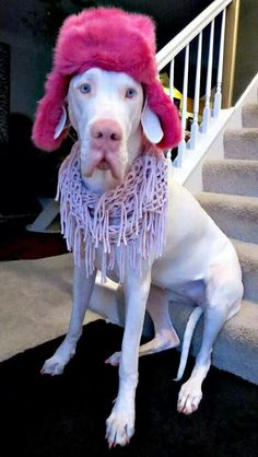 Wilma the Great Dane! This cracks me up...
