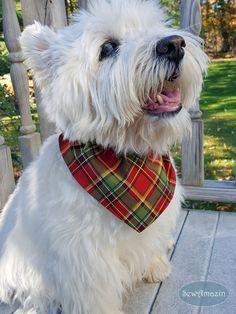 Christmas Peace Holiday Plaid Dog Bandana: Reminiscent of the Scottish Highlands, the Christmas Peace plaid bandana can be worn for many holidays, from Thanksgiving and harvest celebrations to Christmas. Colors include red, green, white, and metallic gold. Order as either a Scrunchie Bandana with an elastic neck or as a Collar Slipcover-style bandana. | SewAmazin @sewamazin #handmade #indiemade #ChristmasDog #cpromo