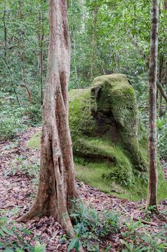 There is an undiscovered city beneath Mount Kulen.