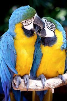 Funny Birds, Cute Birds, Pretty Birds, Beautiful Birds, Animals Beautiful, Beautiful Pictures, Colorful Parrots, Colorful Birds, Exotic Birds