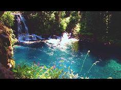 Virtual Hike: Beautiful Crystal Blue Pond and Waterfall, 1 Hour, Forest, River Virtual Travel, Virtual Tour, Virtual World, Walking Videos, Run And Ride, Virtual Field Trips, Water Pond, Walk Run, Great Videos