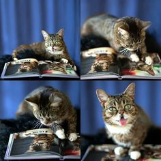 Lil Bub reading her own book.