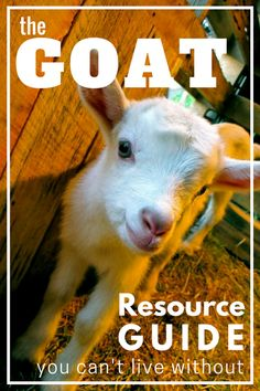 Raise goats smarter not harder! The Busy Homesteader's Goat Management Binder will save you time and frustration and help you keep your herd happy and healthy. Click for more information!