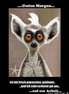 lustiges Bild 'Guten Morgen.jpg' von WienerWalzer. Eine von 1014 Dateien in der Kategorie 'guten-Morgen-Bilder' auf FUNPOT.