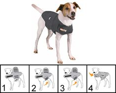The Thundershirt- Does this  work because my friends Lab mix is afraid of loud noises and quick moving things and Car rides gets anxiety! -COMMENT PLZ
