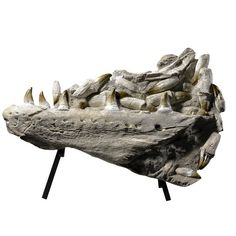 Mosasaur Marine Reptile fossil jaw