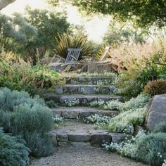 Beautiful dry garden with silver foliage, dry stone and gravel. Alluring use of stairs on a slope and lighted seating area as a focal point and destination.