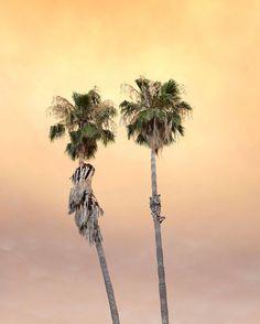 'Cloud' photo series  by Jamey Hoag @hameyjoag for #Minimalzine #photographeroftheday#featured#minimal#minimalmood#minimalism#minimalist#minimalphoto#photozine#zine#journal#contemporaryart#visualarts#losangeles#fire