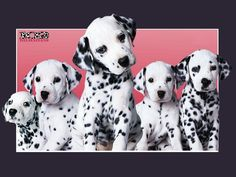 102 DALMATIANS Frosting Sheet Edible Cake Image in Home & Garden, Kitchen, Dining & Bar, Cake, Candy & Pastry Tools | eBay