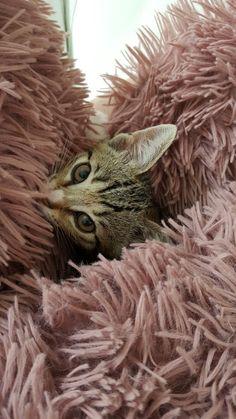 Lovely little kitten.