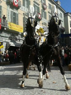 Carneval di Ivrea 2014, presentazione dei carri da getto.