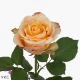 Pinned from Pin It for iPhone Spray Lovely Rococo   Roses   Pinterest