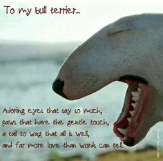 To my Bull Terrier.. first saw i thought it was a shark... so cute ka