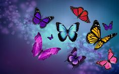 Download Wallpaper ID 2106314 - Desktop Nexus Animals