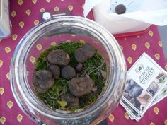 marché aux truffes à Saint Paul Trois Châteaux