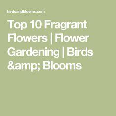 Top 10 Fragrant Flowers | Flower Gardening | Birds & Blooms