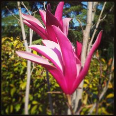 Una flor de primavera.