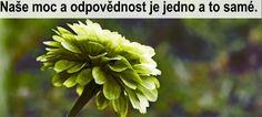 Máme být asertivní nebo vše přijímat, jak je? Plants, Plant, Planets