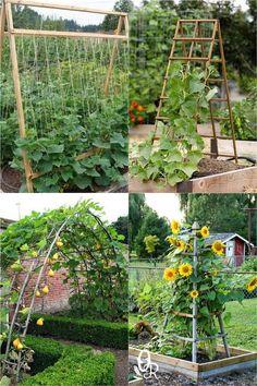 Diy Trellis, Garden Trellis, Trellis Ideas, Bean Trellis, Tomato Trellis, Trellis Design, Backyard Vegetable Gardens, Outdoor Gardens, Home Vegetable Garden Design