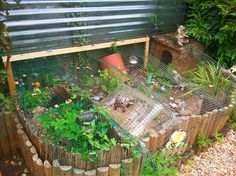 Your big tortoise is a source of pleasure to you. You bought the turtle so you can have more fun with family members and friends. Tortoise Enclosure, Tortoises, Exotic Pets, Aquarium, The Outsiders, Big, Raising, Image, Goldfish Bowl