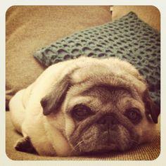 Pug = loaf.