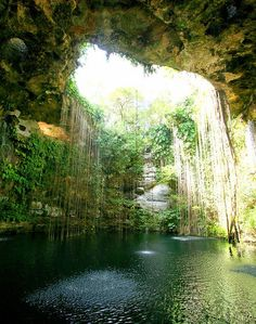 Of course I want to see the famous ruins of Chichen Itza as well, but while I'm there. Sacred Groves of Chichen Itza, Mexico Places Around The World, Oh The Places You'll Go, Places To Travel, Places To Visit, Around The Worlds, Cenote Mexico, Beautiful World, Beautiful Places, Sacred Groves