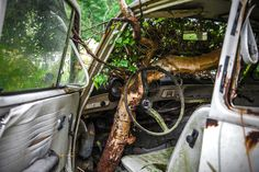 Photographer Svein Nordrum ventured into the dense woods to snap some pictures of the abandoned vehicles.