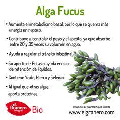 Propiedades del Alga Fucus. Pulsa en el enlace para acceder al artículo completo.