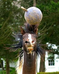 Someone like to play ball! #funnyhorse
