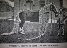 American Folk Art @ Cooperstown: The Horse with the Longest Hair in the World
