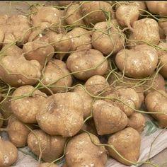 健康一級棒: 秒懂豆薯的功效和成分 你一定要知道的知識!!