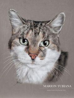 Realistic Drawings, Art Drawings Sketches, Cat Drawing, Painting & Drawing, Buffalo Painting, Scratchboard Art, Gatos Cats, Pastel Art, Wildlife Art