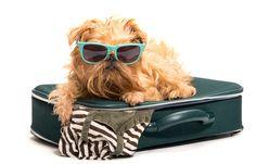 Aunque las vacaciones son emocionantes, pueden ser potencialmente peligrosas para los perros, ya que ir al extranjero puede exponerlos a enfermedades con las que no necesariamente pueden estar en contacto en el hogar. Algunas de estas enfermedades pueden tener efectos