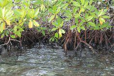 5'Post: Serpihan Surga Yang Tiada Duanya, Pulau Pannikiang...