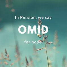 11 Beautiful Words to Make You Fall in Love With the Persian Language Omid-Hope Unusual Words, Rare Words, Unique Words, New Words, Learn Farsi, Learn Persian, Urdu Words With Meaning, Persian Quotes, Persian Names