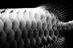 Fish in Still-Life #02 | Flickr - Photo Sharing!