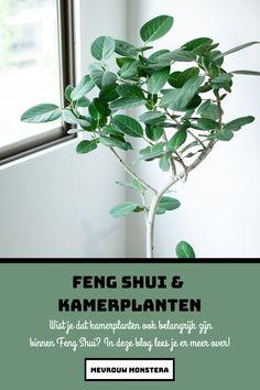 Wist je dat kamerplanten volgens Feng Shui voor positieve energie in huis kunnen zorgen? In deze blog lees je er meer over! #fengshui #fengshuiplants #fengshuiliving #fengshuitips #kamerplanten #indoorplants #plants #mevrouwmonstera