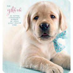 Enjoy Your Life, Wise Words, Labrador Retriever, Cards, Photography, Animals, Thoughts, Quotes, Labrador Retrievers