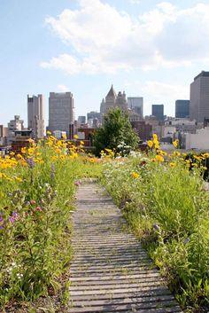 Belægning, belægningstegl, tegl, kliker, terrasse, Ziegel, bricks. Roof garden - like a meadow of flowers