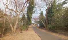 Sanjay Gandhi National Park, Mumbai  is haunted by a female hitchhiker asking…