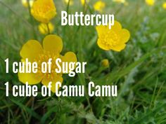 Buttercup: 1 cube of Sugar and 1 cube of Camu Camu.  For more Scentsy recipes contact me at www.daniellecoziahr.scentsy.us
