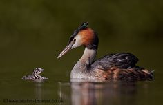 Mother and baby bonding... by Austin Thomas on 500px