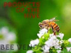 Bee venom is known for it's anti-inflammatory affects and research suggests it may be helpful for arthritis suffers. And Bee venom creams and masks have become renowned for anti-aging properties and it's known as 'nature's botox'.
